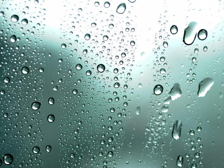 観葉植物_初心者_おすすめ_水滴の画像