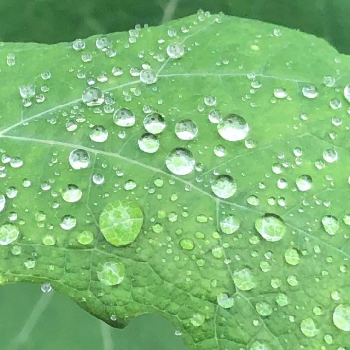嫌なイメージに隠れてた子どもの頃から続く雨の日の楽しみの画像