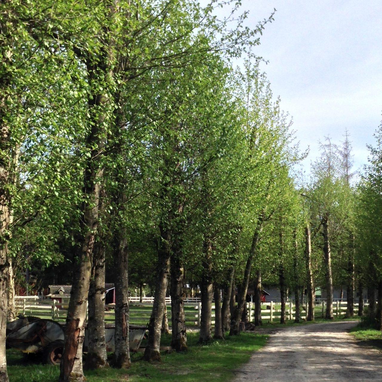 カナダ暮らしで毎日歩いた緑の中のまっすぐな道