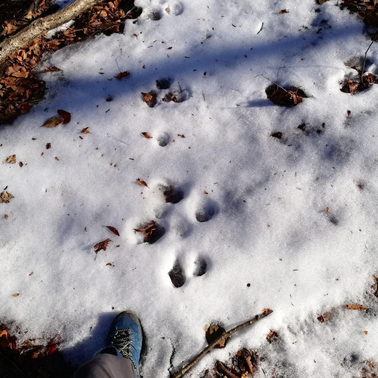 冬の代表。雪が積もっている様子