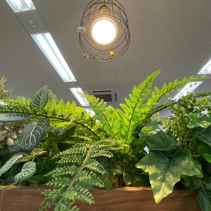 頭を上げるとそこには観葉植物。フェイクのインテリアや飾りの画像