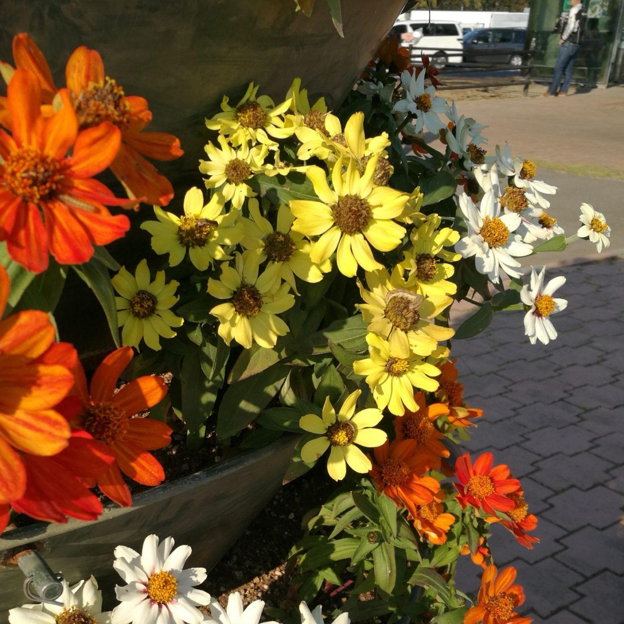 秋の日に照らされる花