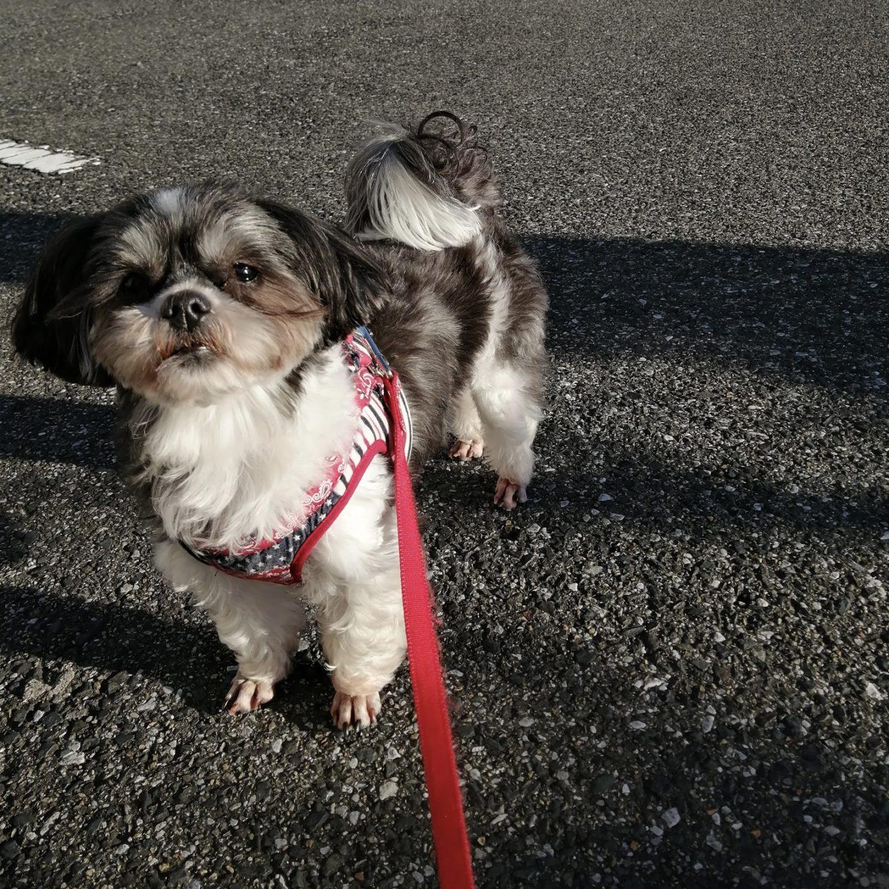 散歩中の犬の写真