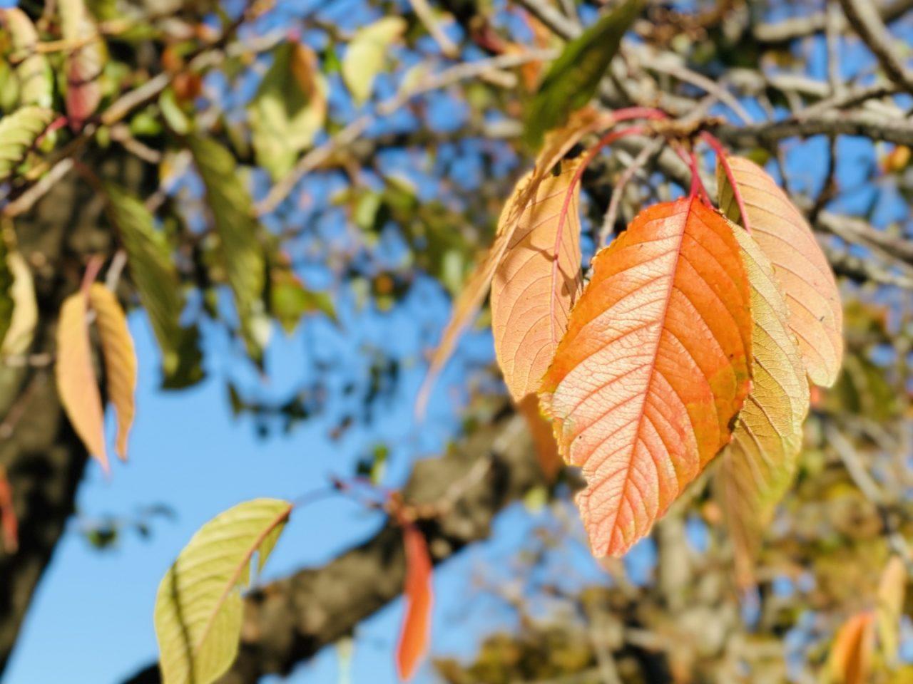 見上げてみつけたきれいな秋