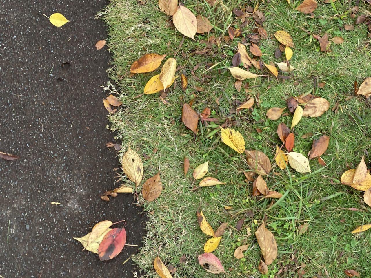 散歩道で見つけたきれいな落ち葉
