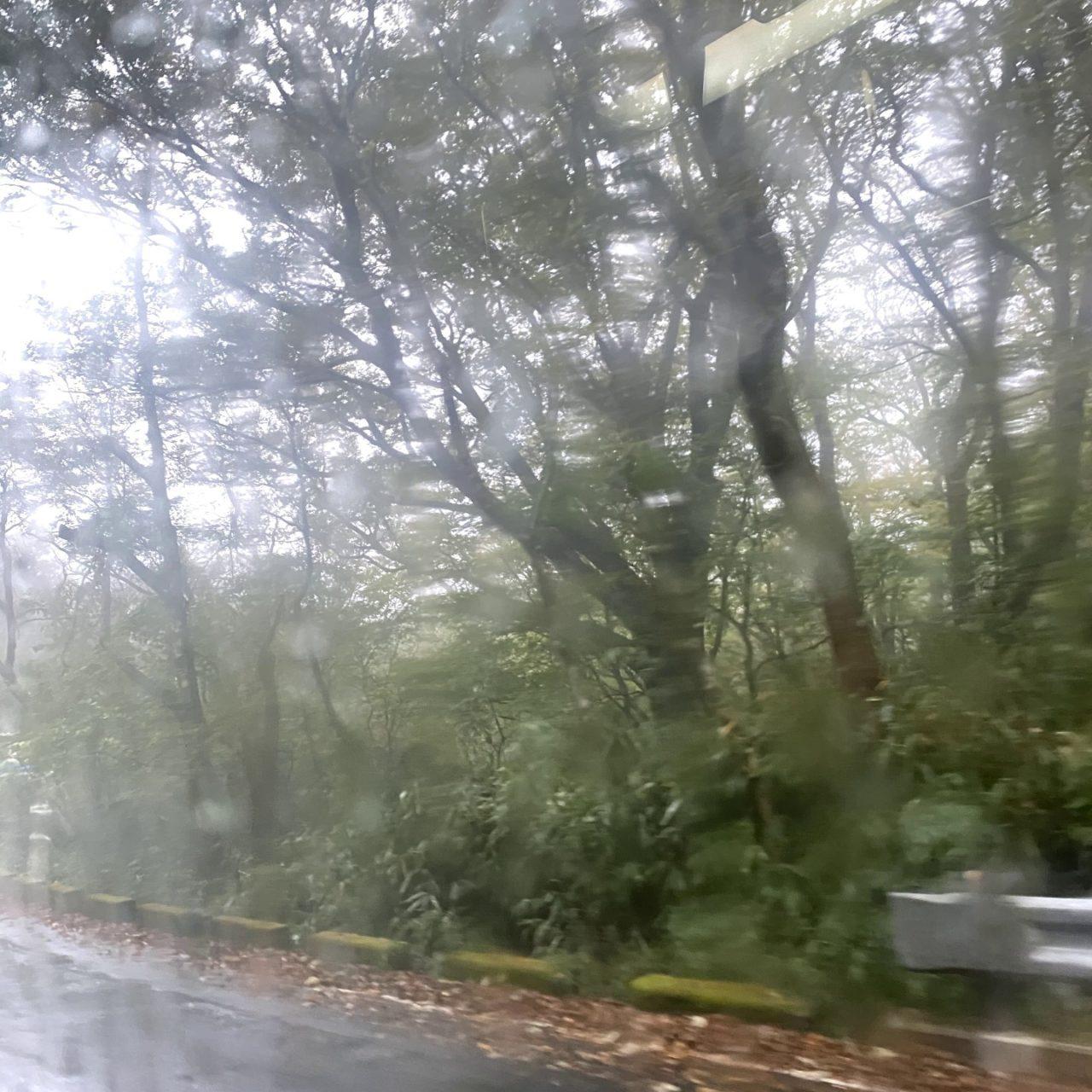 バスからの眺め、流れる雨と木々。