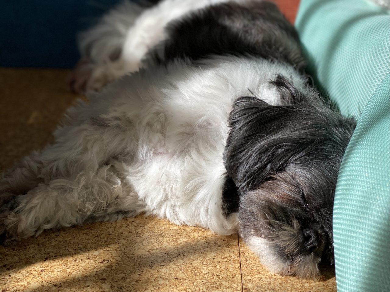ひなたで昼寝する犬の写真