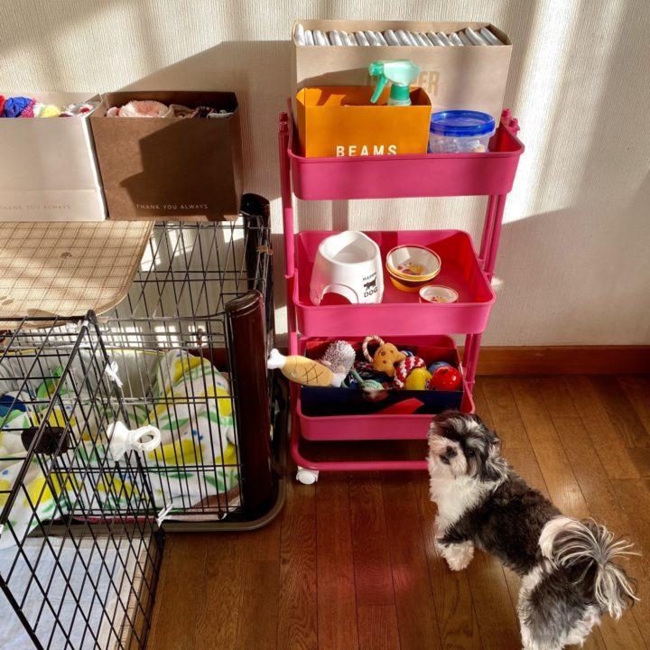 ペット用品の収納完成!と愛犬の画像