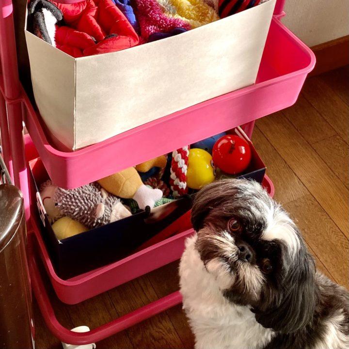 おもちゃを眺めている犬の画像
