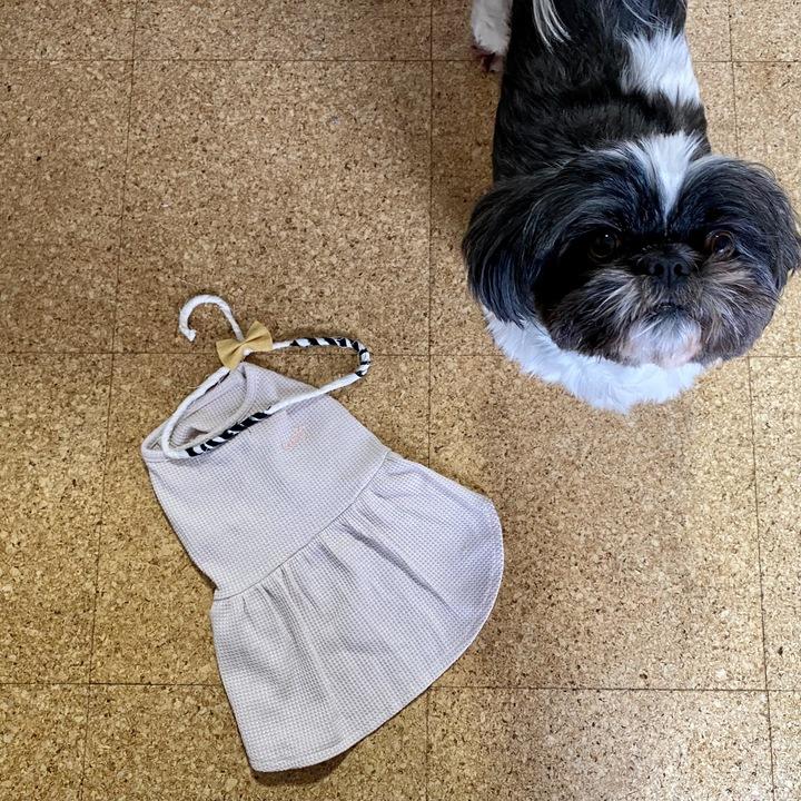 愛犬と犬服の画像
