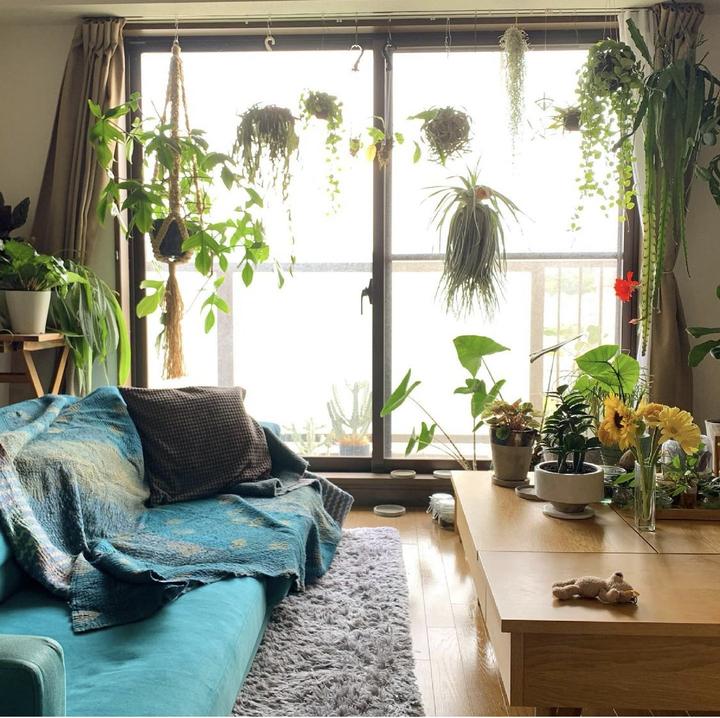 【2021版】賃貸でもできる!観葉植物の飾り方 ~吊るす編~の画像
