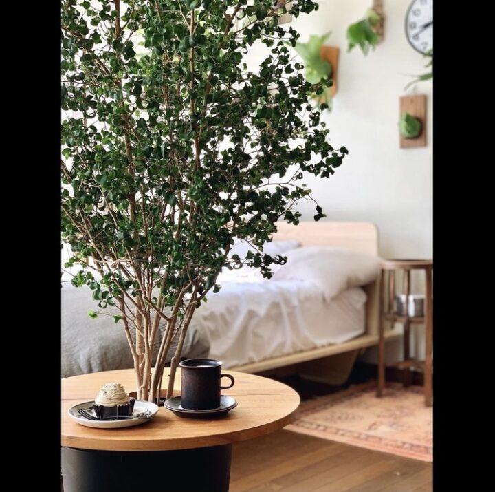 観葉植物_飾り方_プラントテーブル