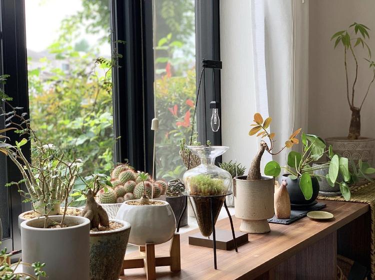 【リビング編】観葉植物の飾り方 Best20