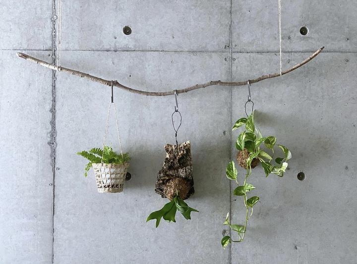 観葉植物の飾り方_吊るす_流木