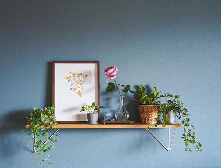 【2021版】賃貸でもできる!観葉植物の飾り方 ~壁掛け編~の画像