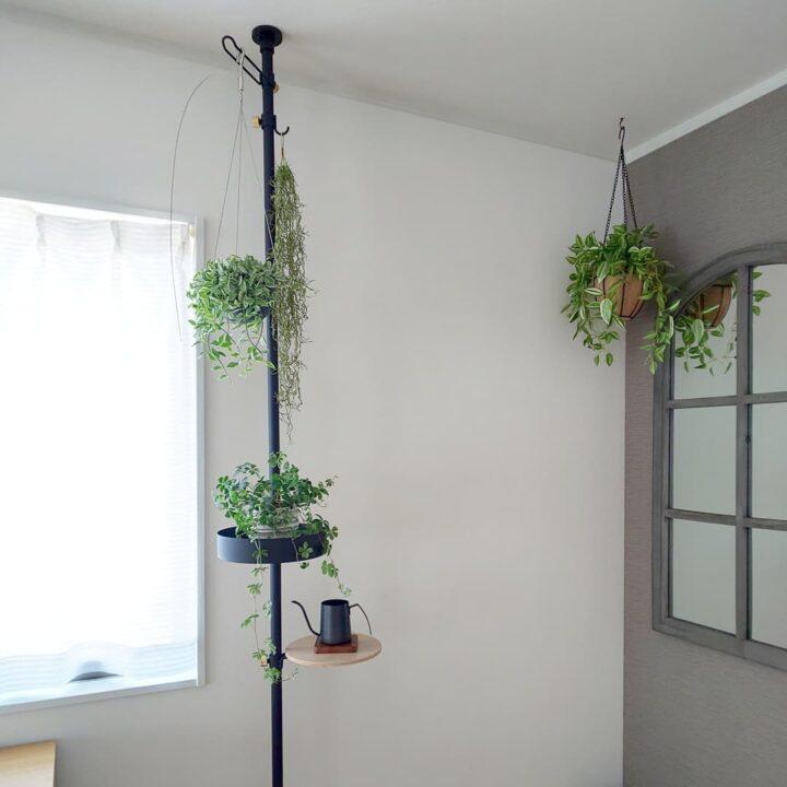 賃貸でも自由に楽しもう!突っ張り棒で観葉植物を吊るす飾り方の画像